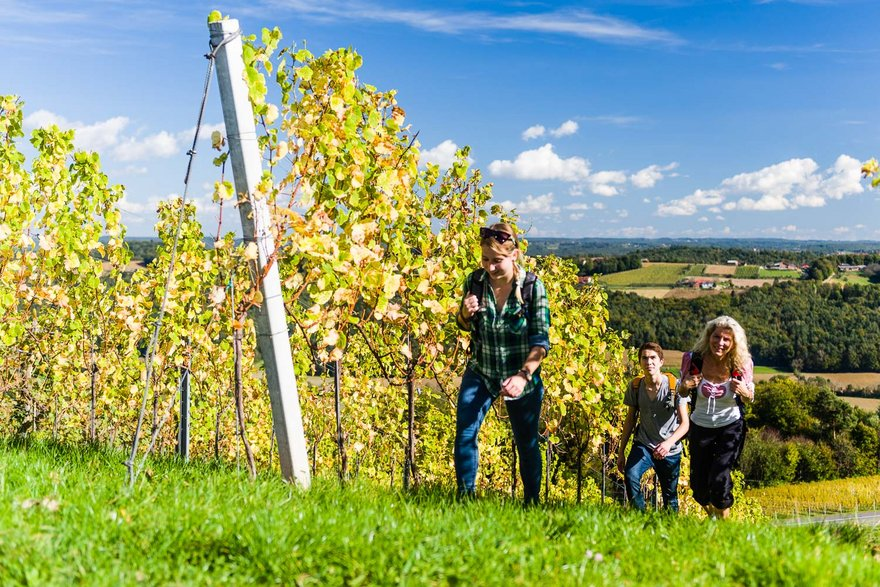 Weinwandern in der Region